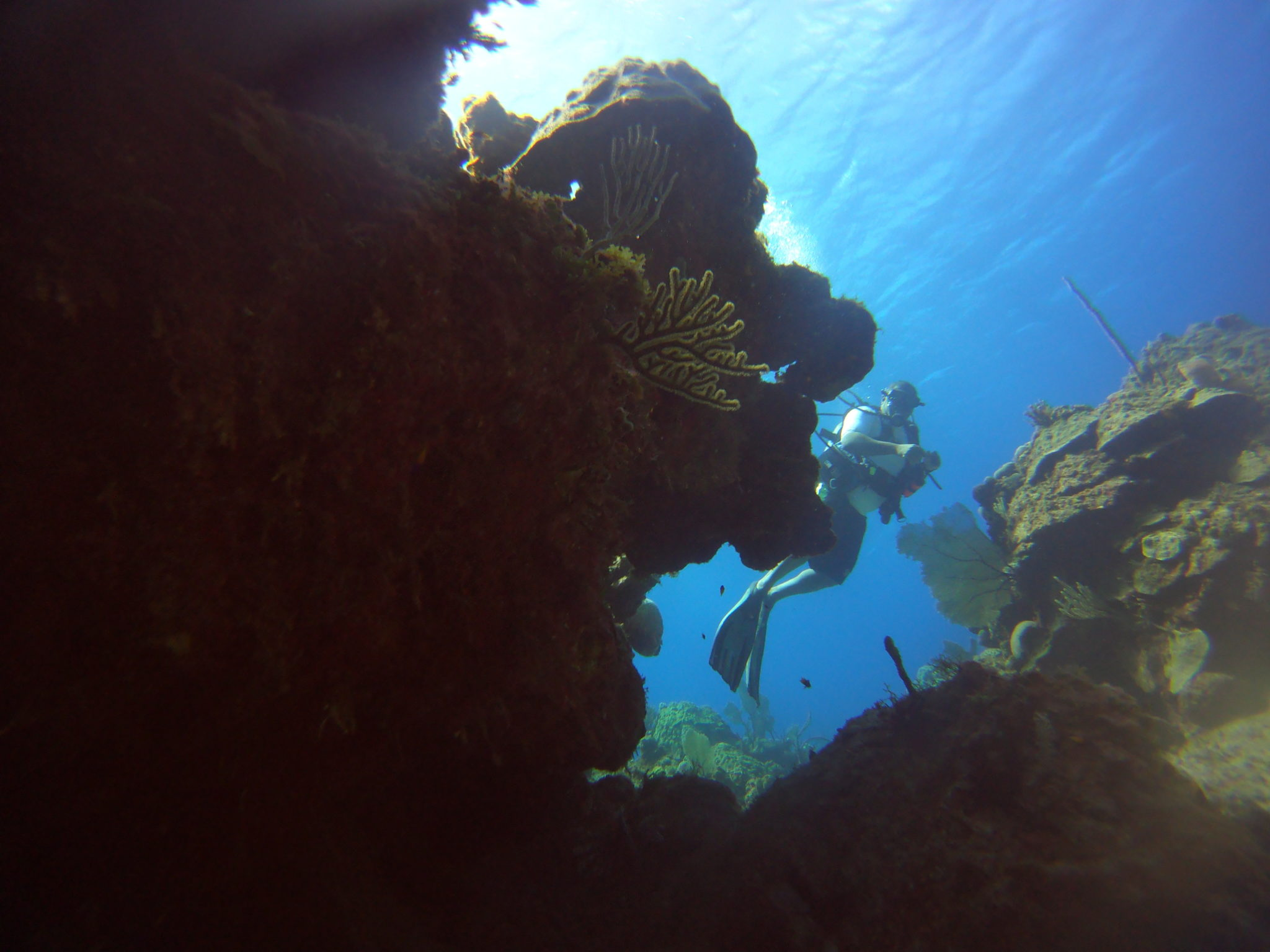 things to do scuba diving eleuthera bahamas